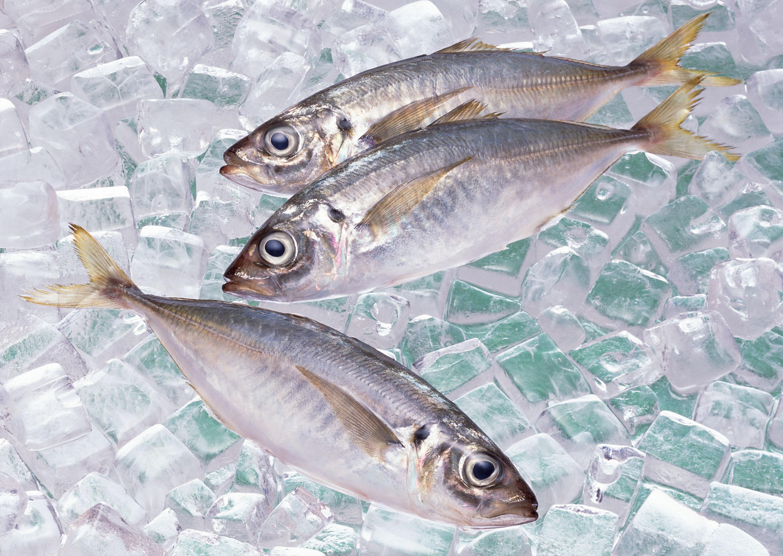 Жителям Курганской области вместо рыбы продавали лед